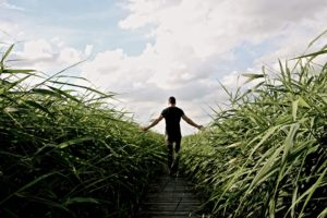 high-grass-1504284_960_720